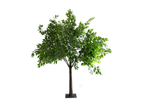 Ficus Enchanted Tree Prop hire