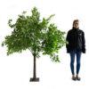 Ficus Enchanted Tree Prop